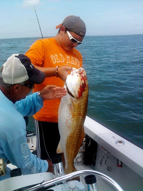 galveston tarpon fishing houston sharks la porte kingfish