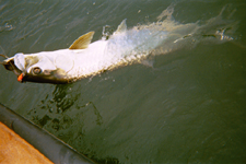 lake jackson charter guide port lavaca fishing trips matagorda tarpon gulf of mexico fishing galveston flounders fishing houston fishing guides la porte speckled trouts